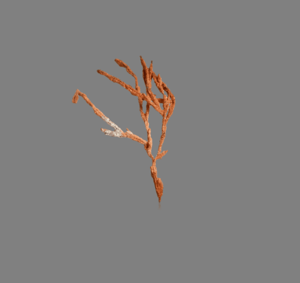 copper-wires-2073062680